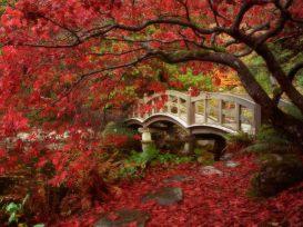 Les ponts de l'amour
