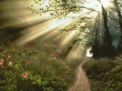 Chemin de terre chemin de lumière