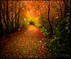 La forêt enchantée_Discurrere